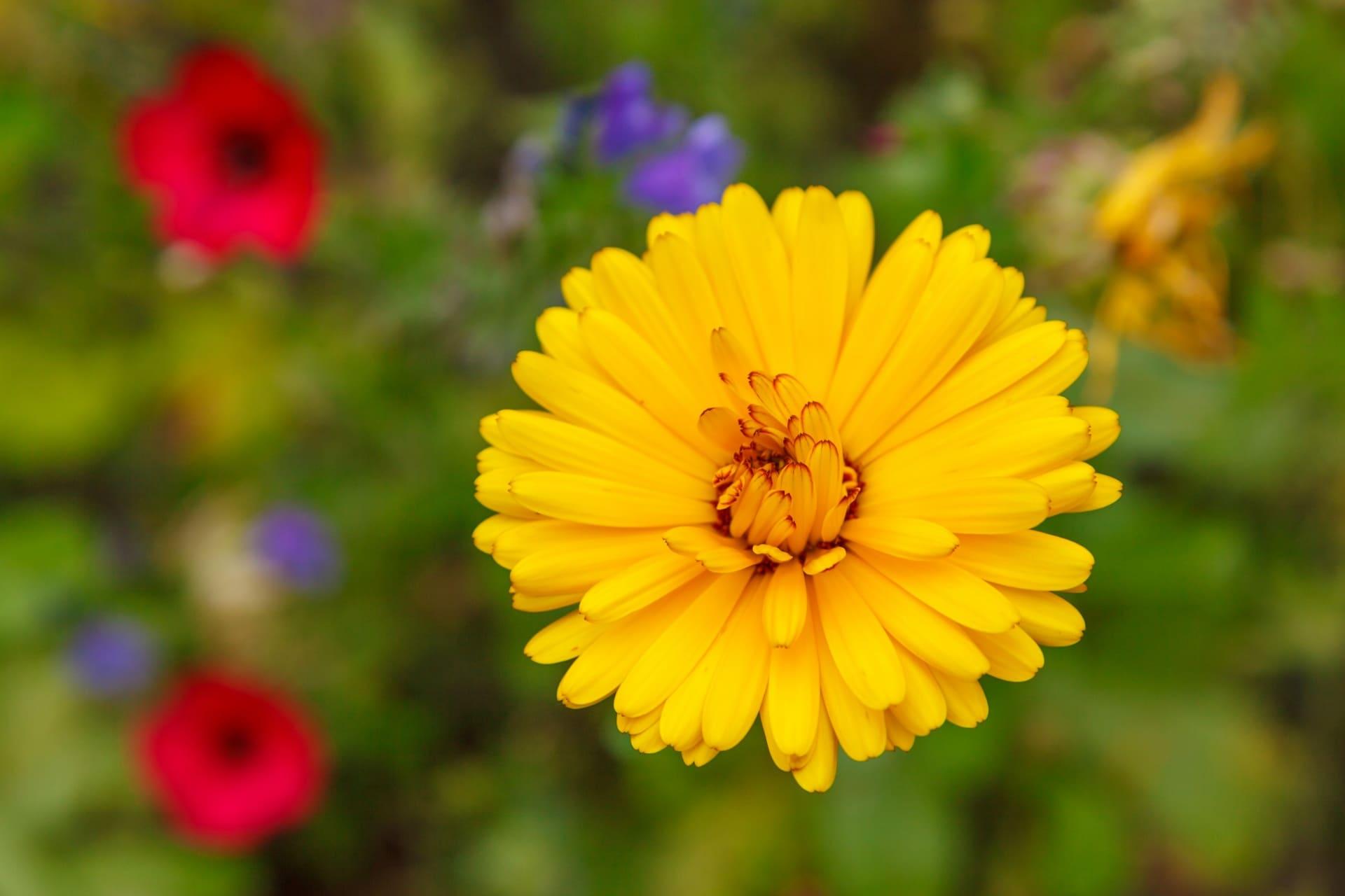 Las flores amarillas son muy decorativas