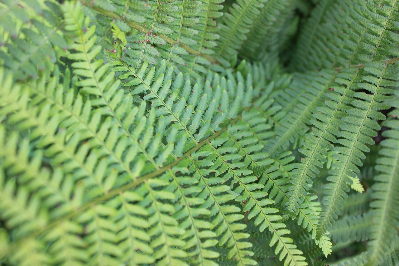 Los helechos son plantas pequeñas que viven en ambientes húmedos