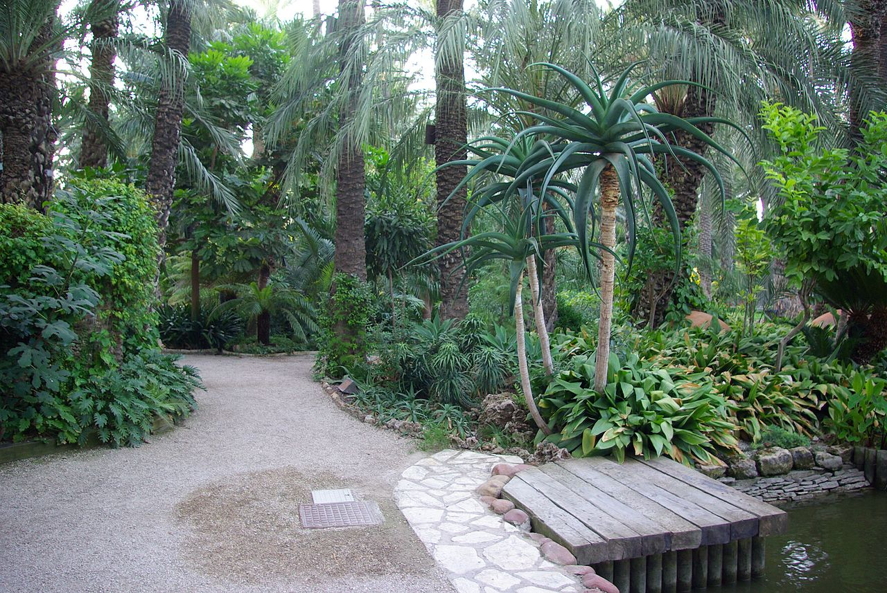 Las plantas del Huerto del Cura son sobretodo palmeras