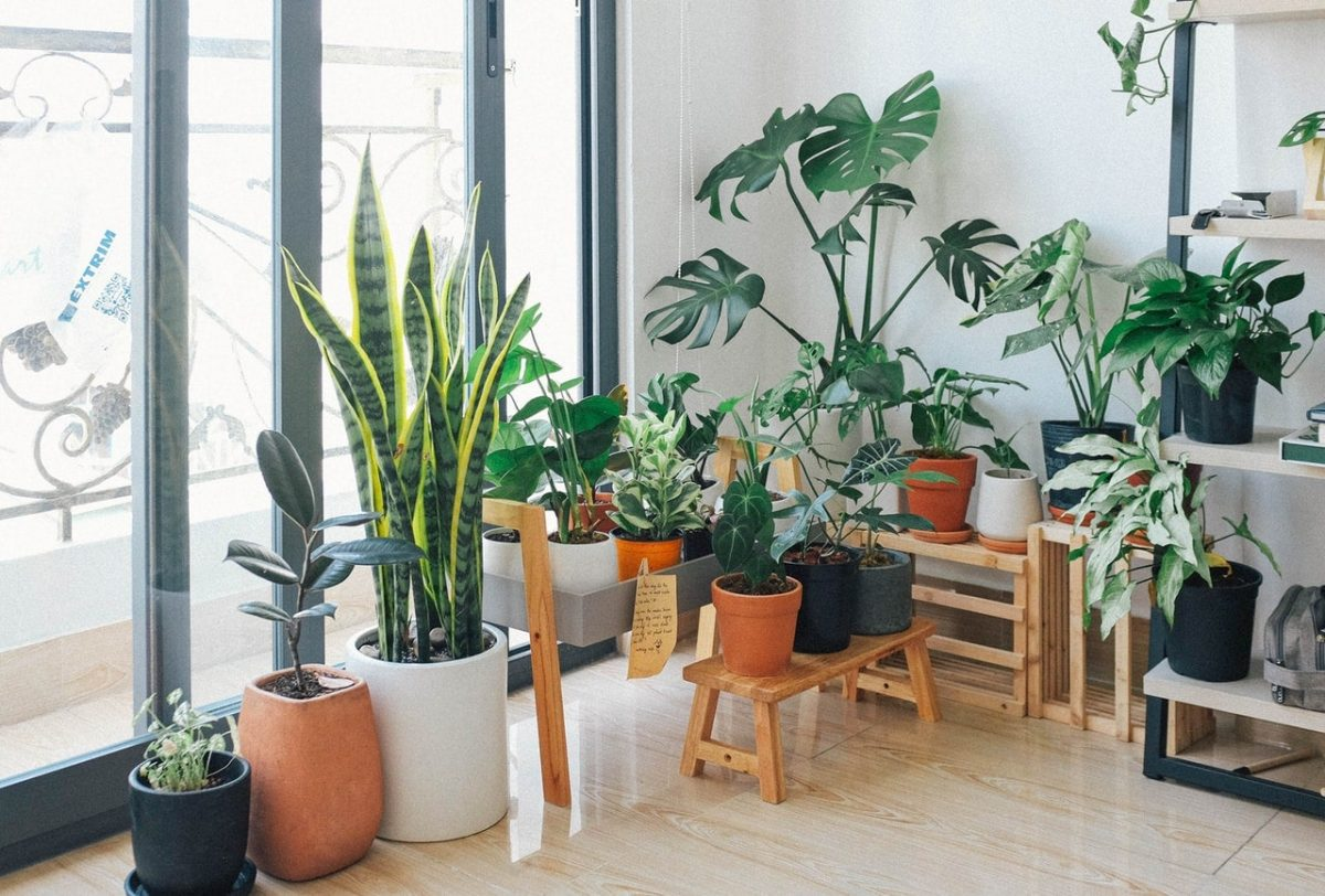 Las plantas en interior necesitan cuidados especiales