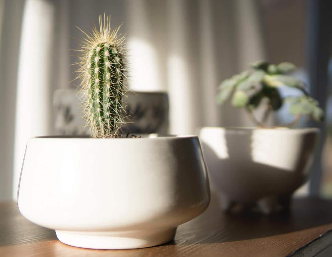Las macetas sin agujeros no son recomendables para la mayoría de plantas