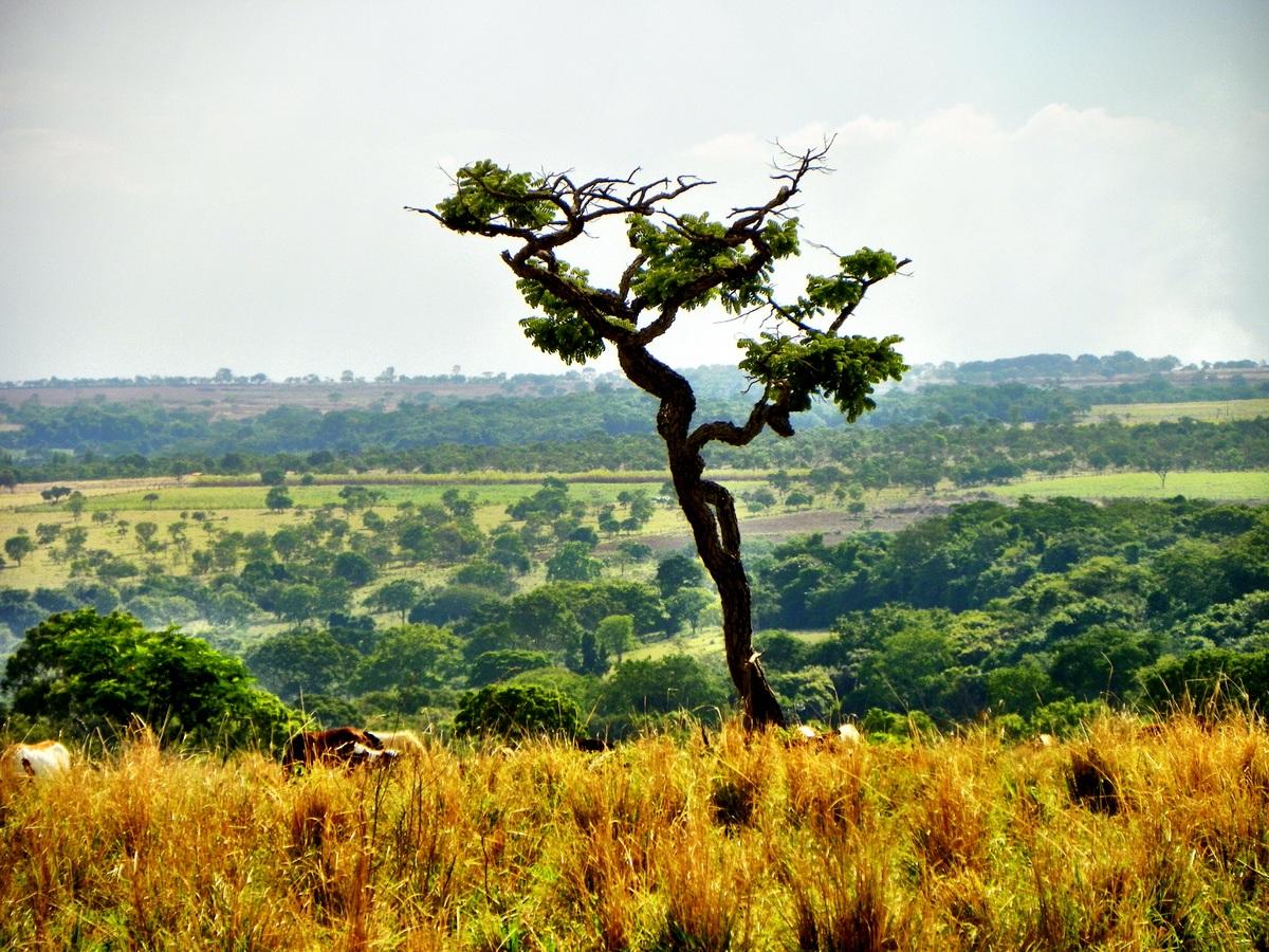 Hay muchas plantas en peligro de extinción en el mundo