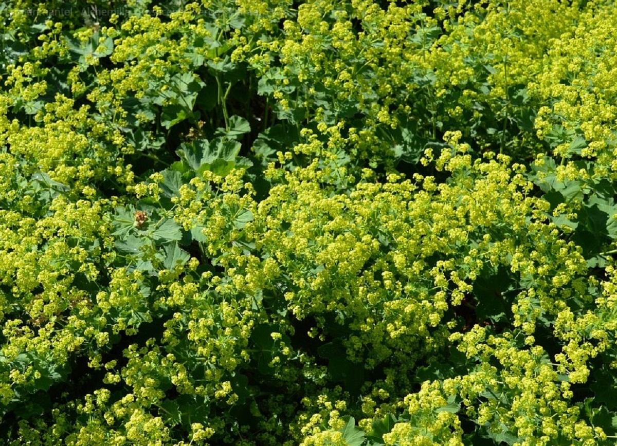 arbusto lleno de flores amarillas