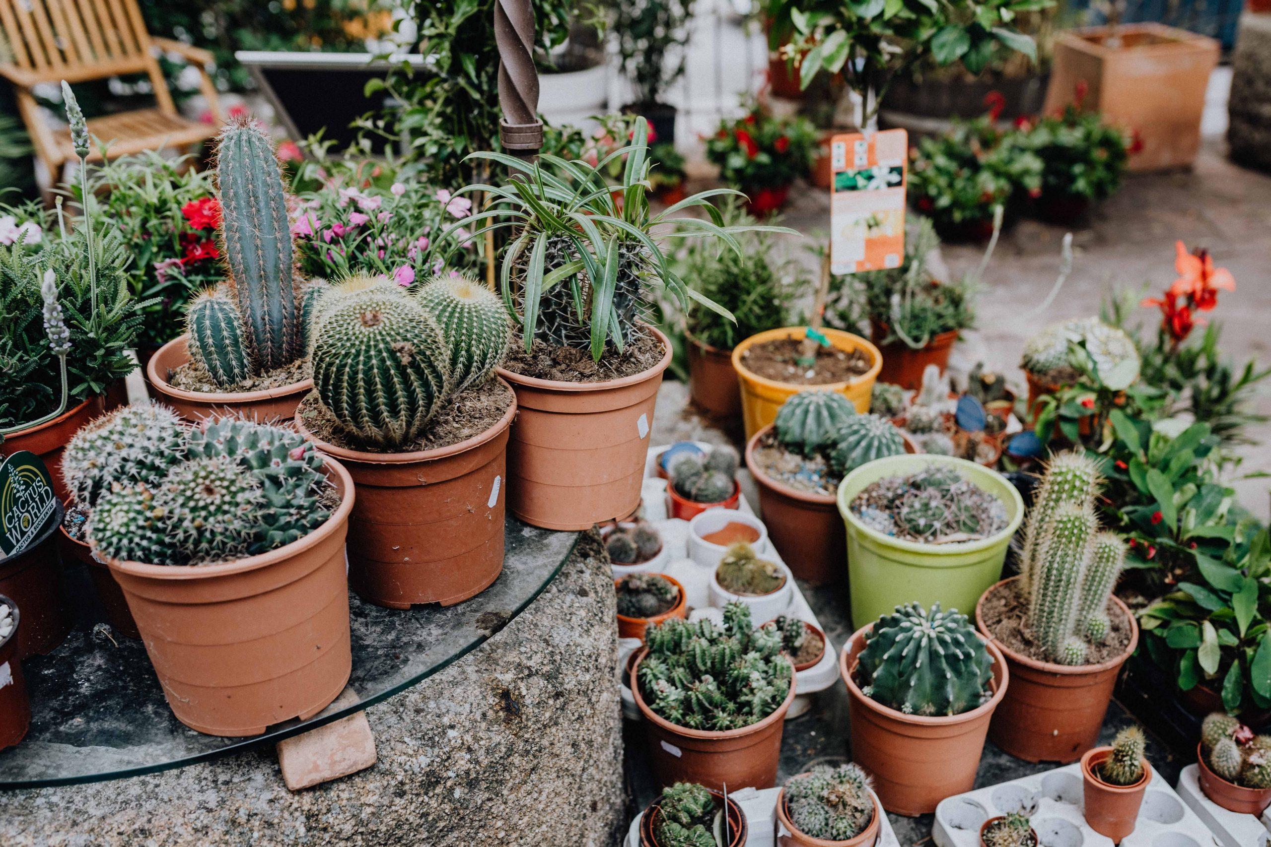 Puedes crear un bonito jardín de macetas en tu terraza