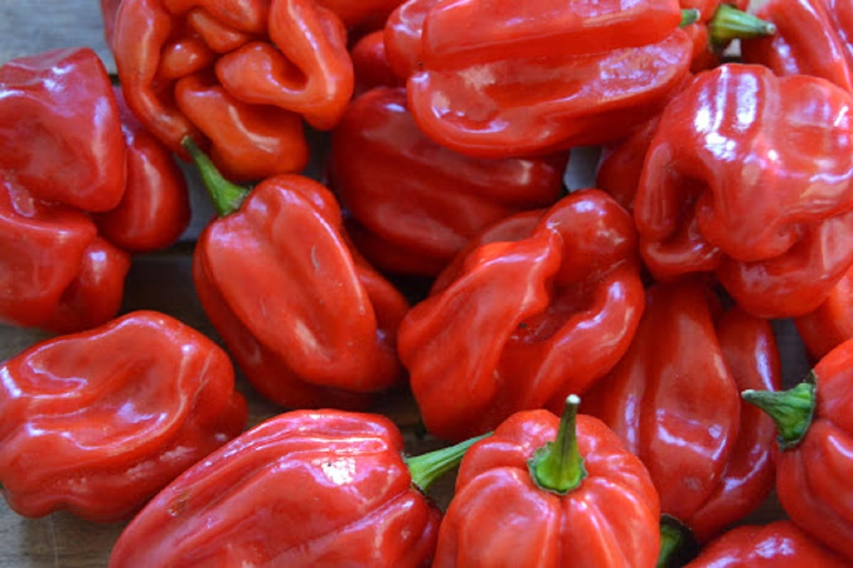 chile habanero de color rojo