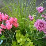 Combina plantas para crear bonitas composiciones