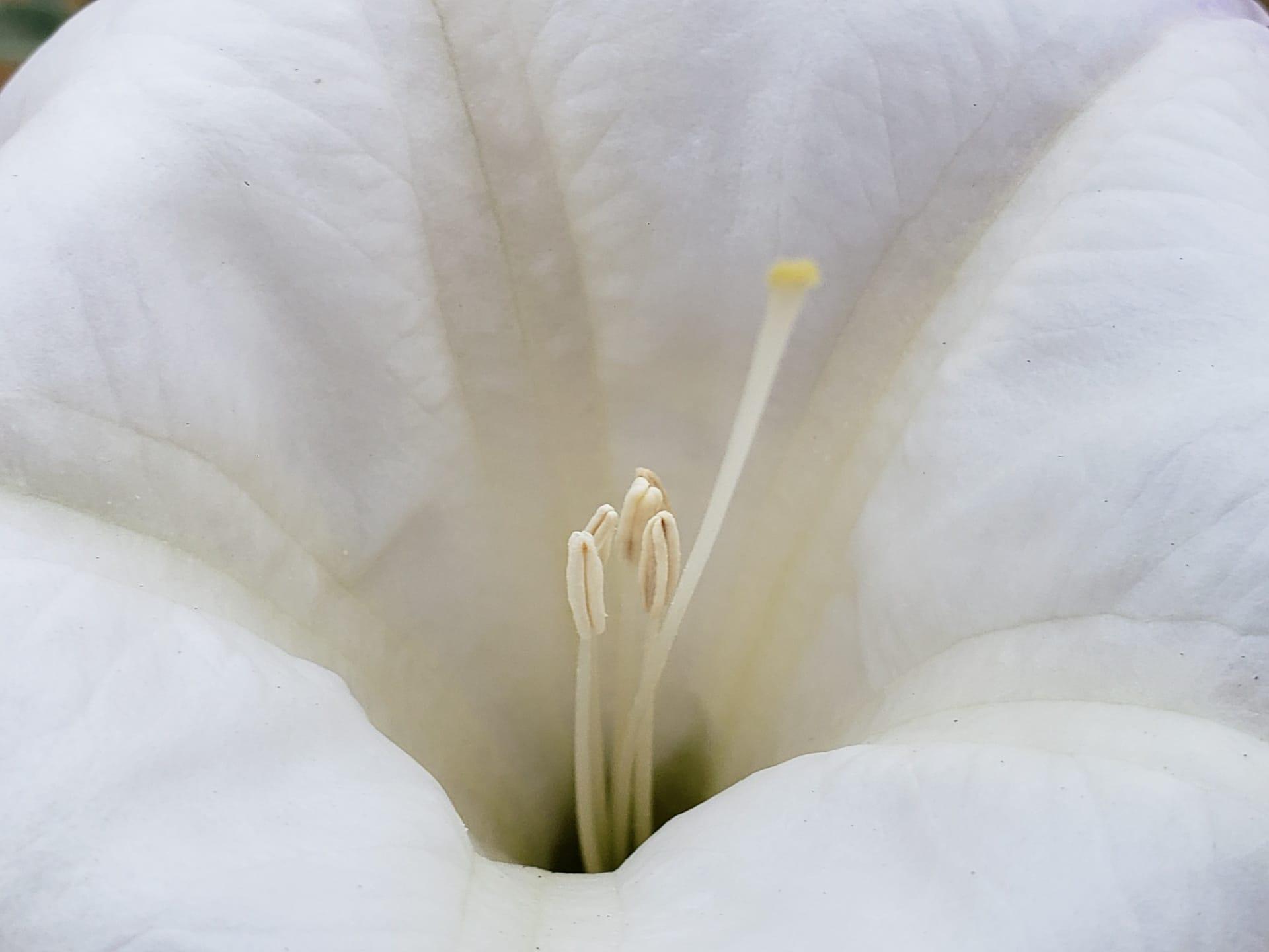 El estambre es una parte importante de la flor