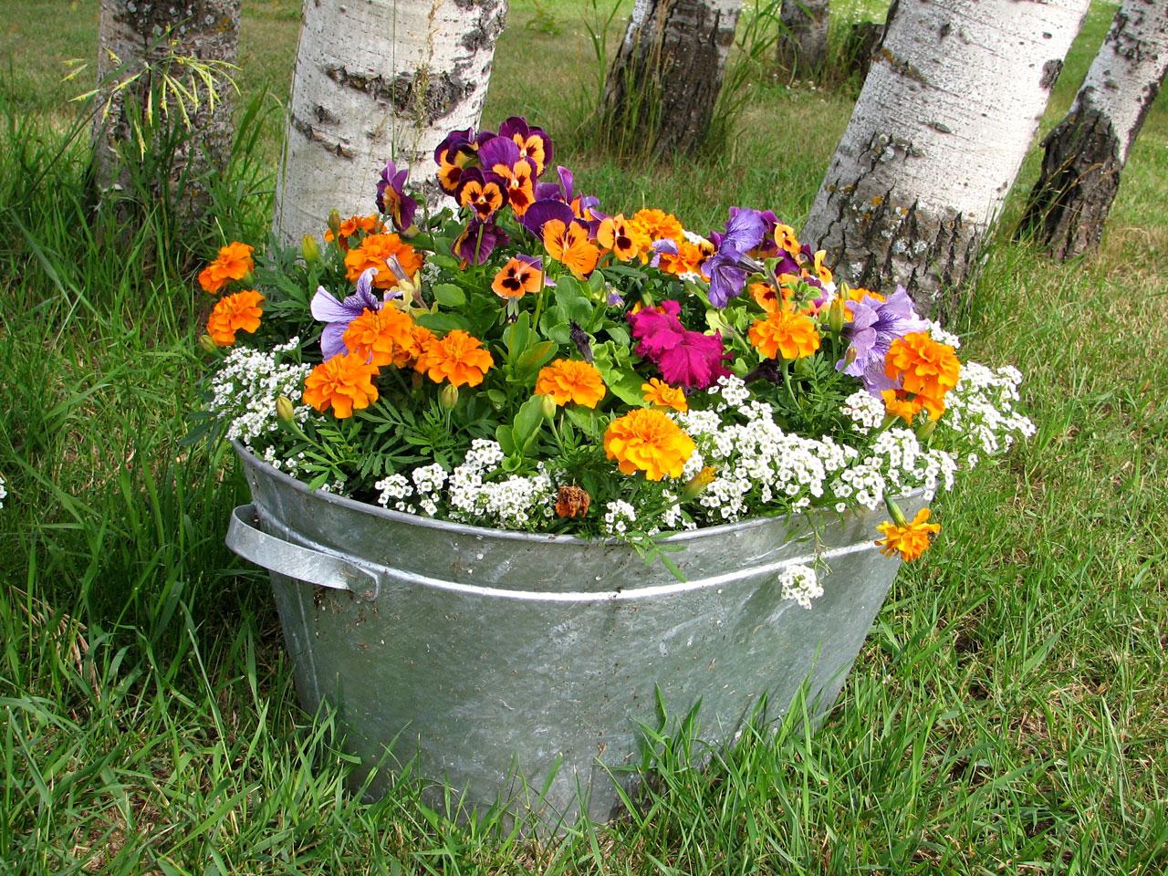 Las flores pequeñas son preciosas si se combinan