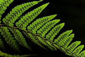 Las hojas son las principales encargadas de realizar la fotosíntesis