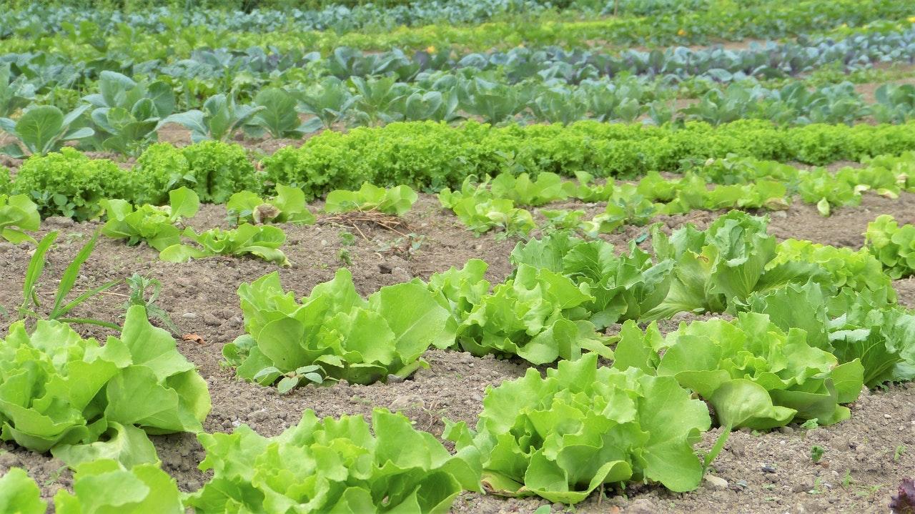 La agricultura sostenible cuida del medio ambiente
