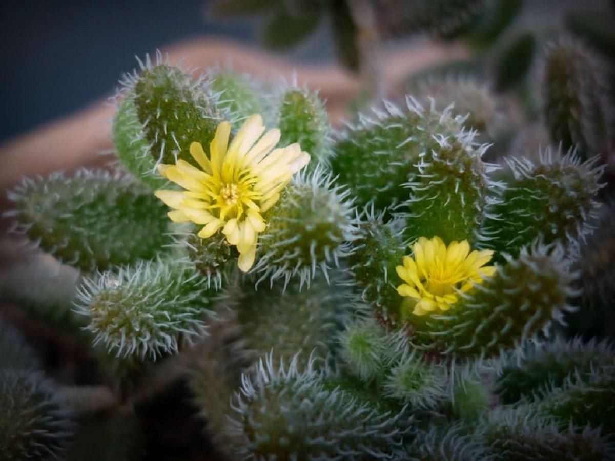 imagen de cerca de dos flores de color amarillo