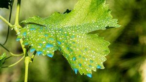 insecticida de color azul en una hoja