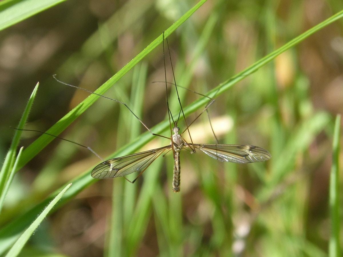 insecto sujeto en una pequena hierba de un cesped