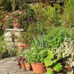 Crea un bonito jardín de macetas