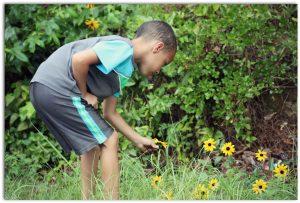 Enseña a tus hijos a cuidar de las plantas