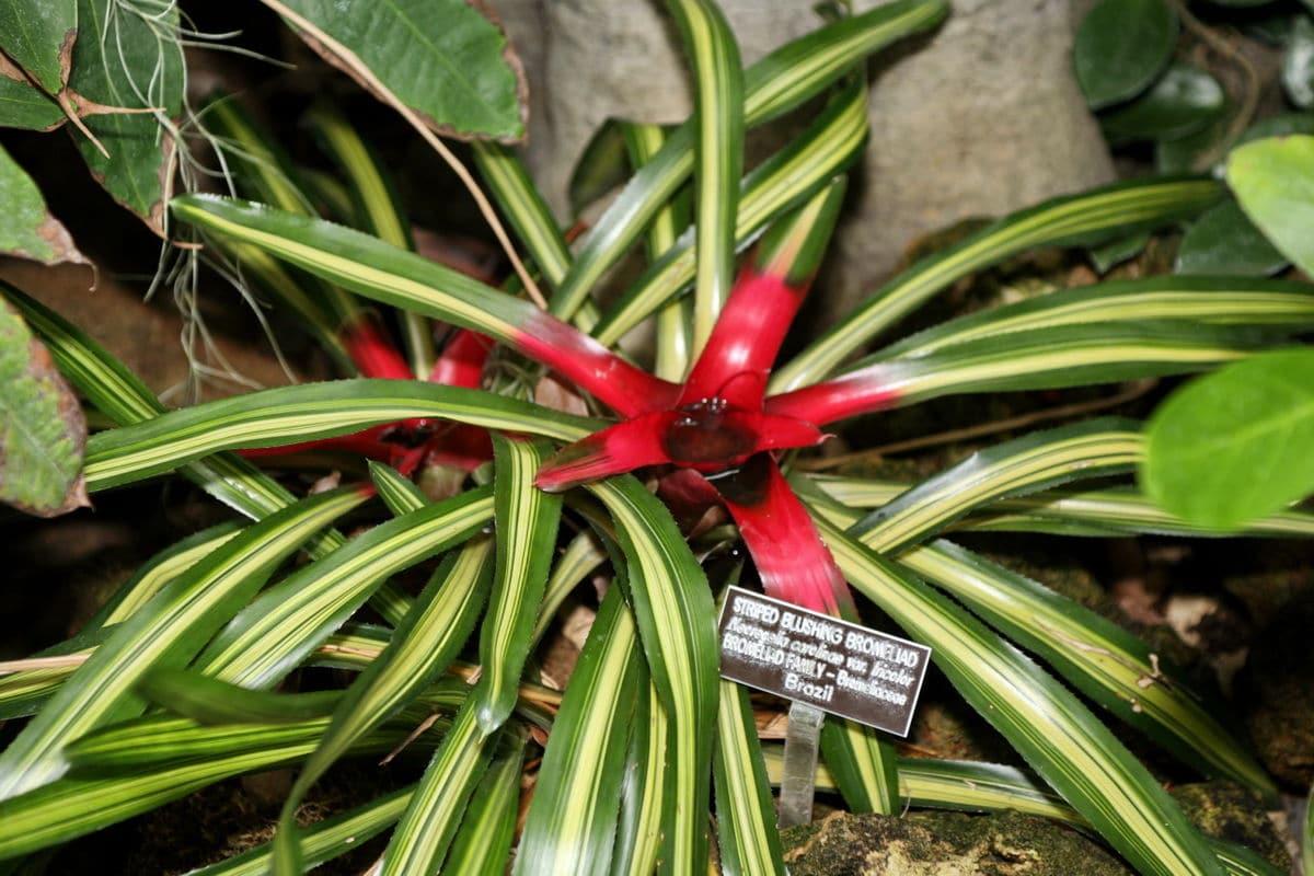 planta con cintas y una flor roja
