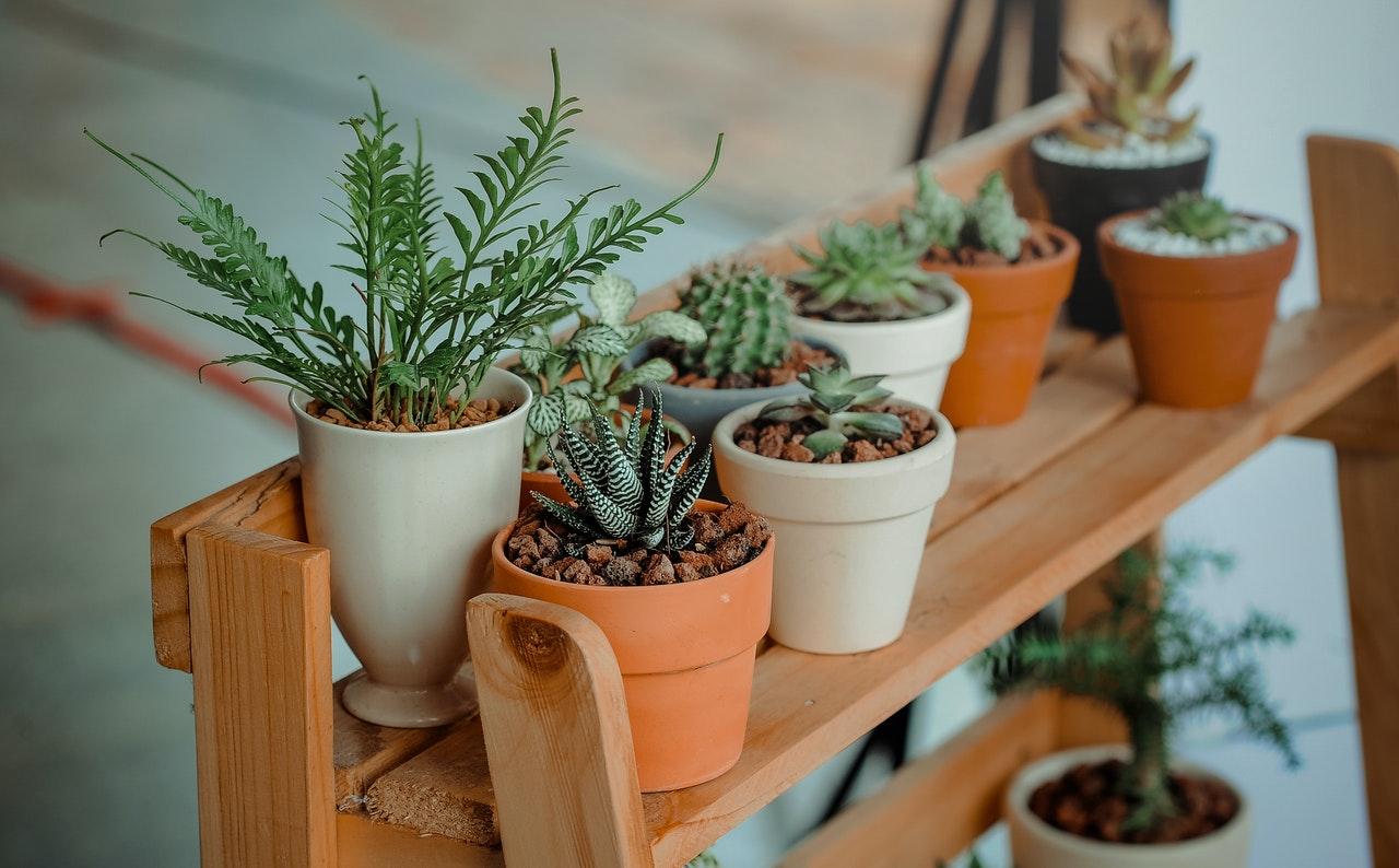 Escoge plantas pequeñas para tener en casa