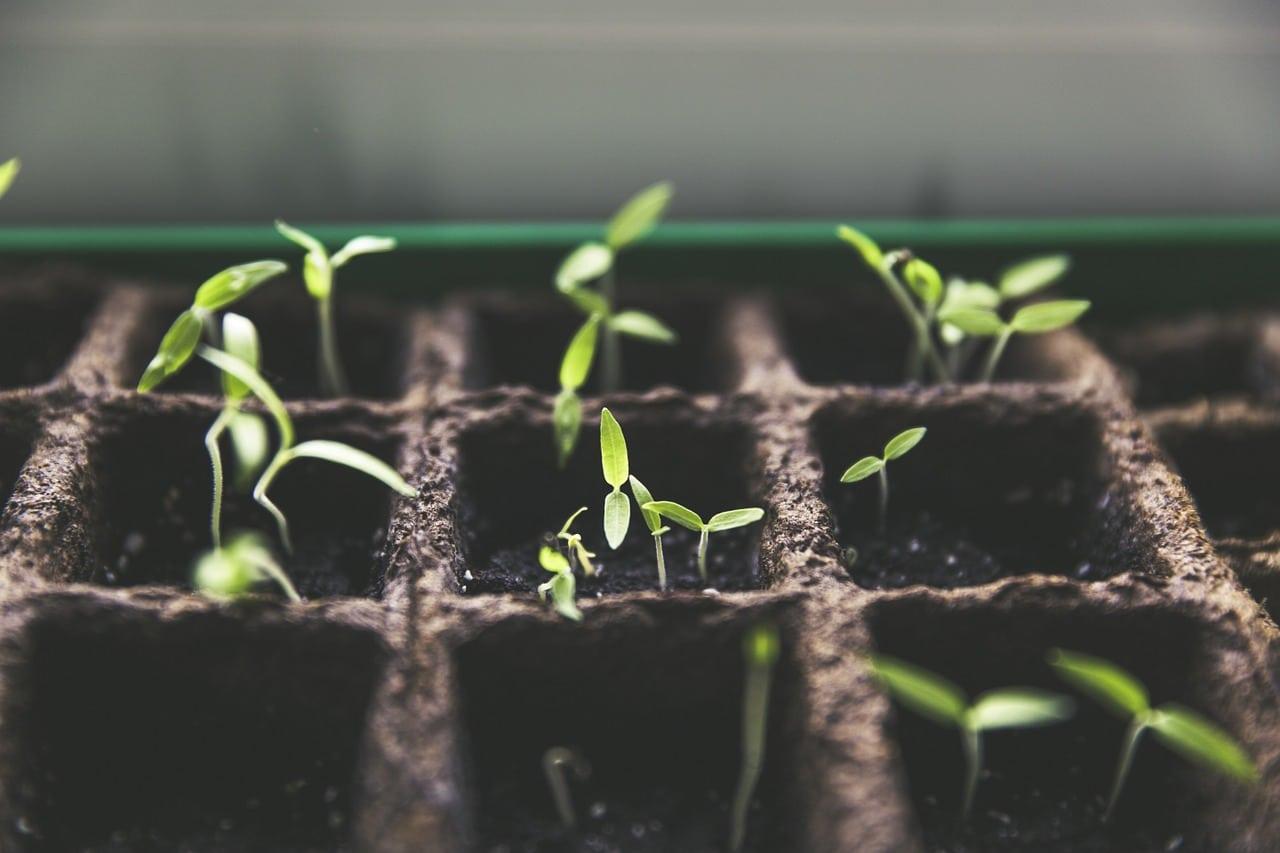 Puedes necesitar un semillero si quieres sembrar semillas
