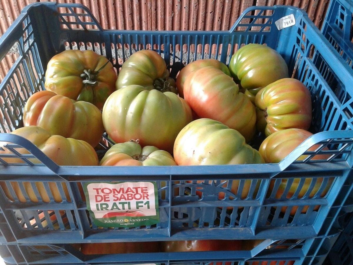 venta de tomate optima