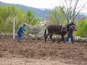 Agricultura tradicional para cosechar