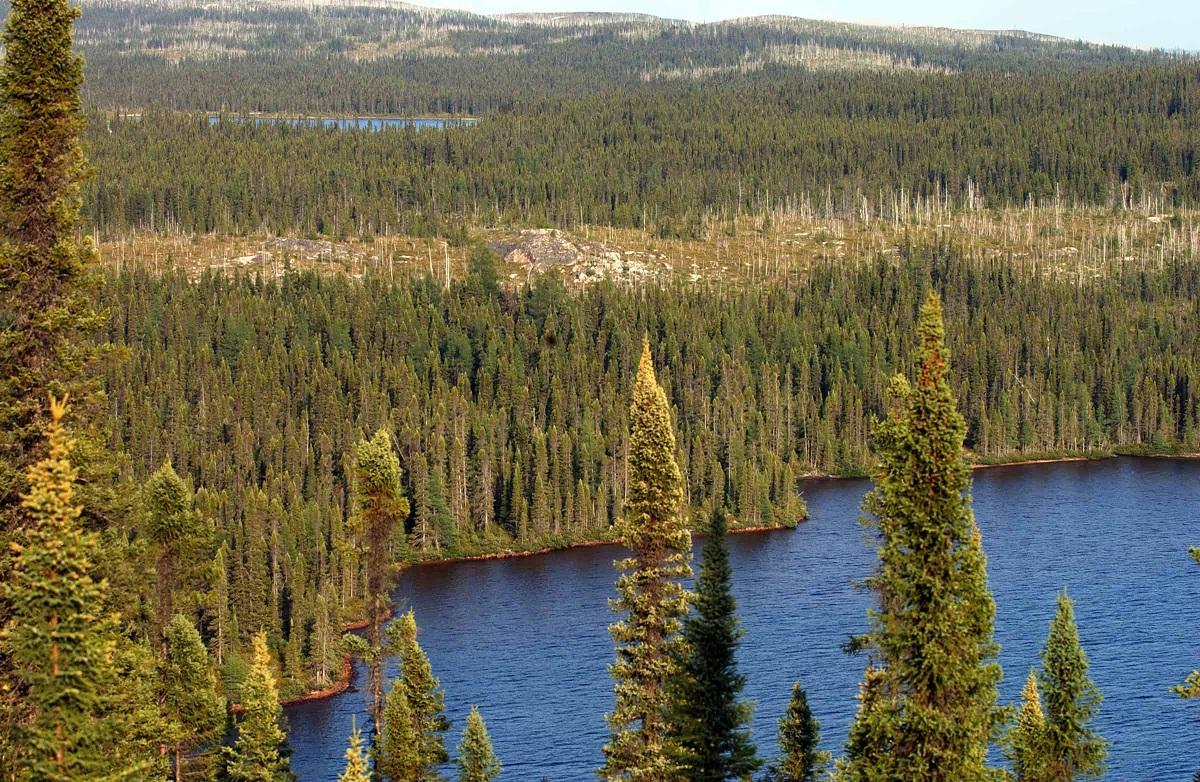 Bosque perennifolio