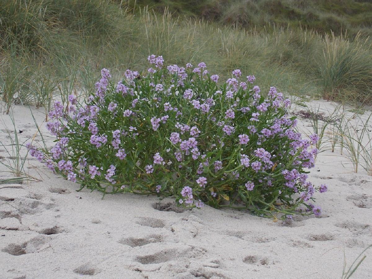 arbusto que sobresale de la arena de una playa