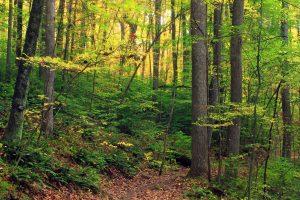 En el bosque encontramos vegetación sobre todo arbórea