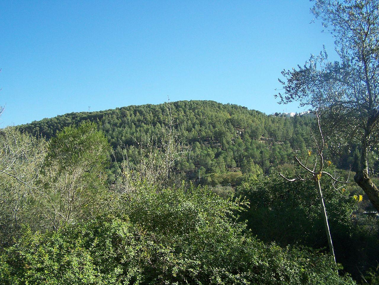 El bosque mediterráneo es un bosque de pocas precipitaciones