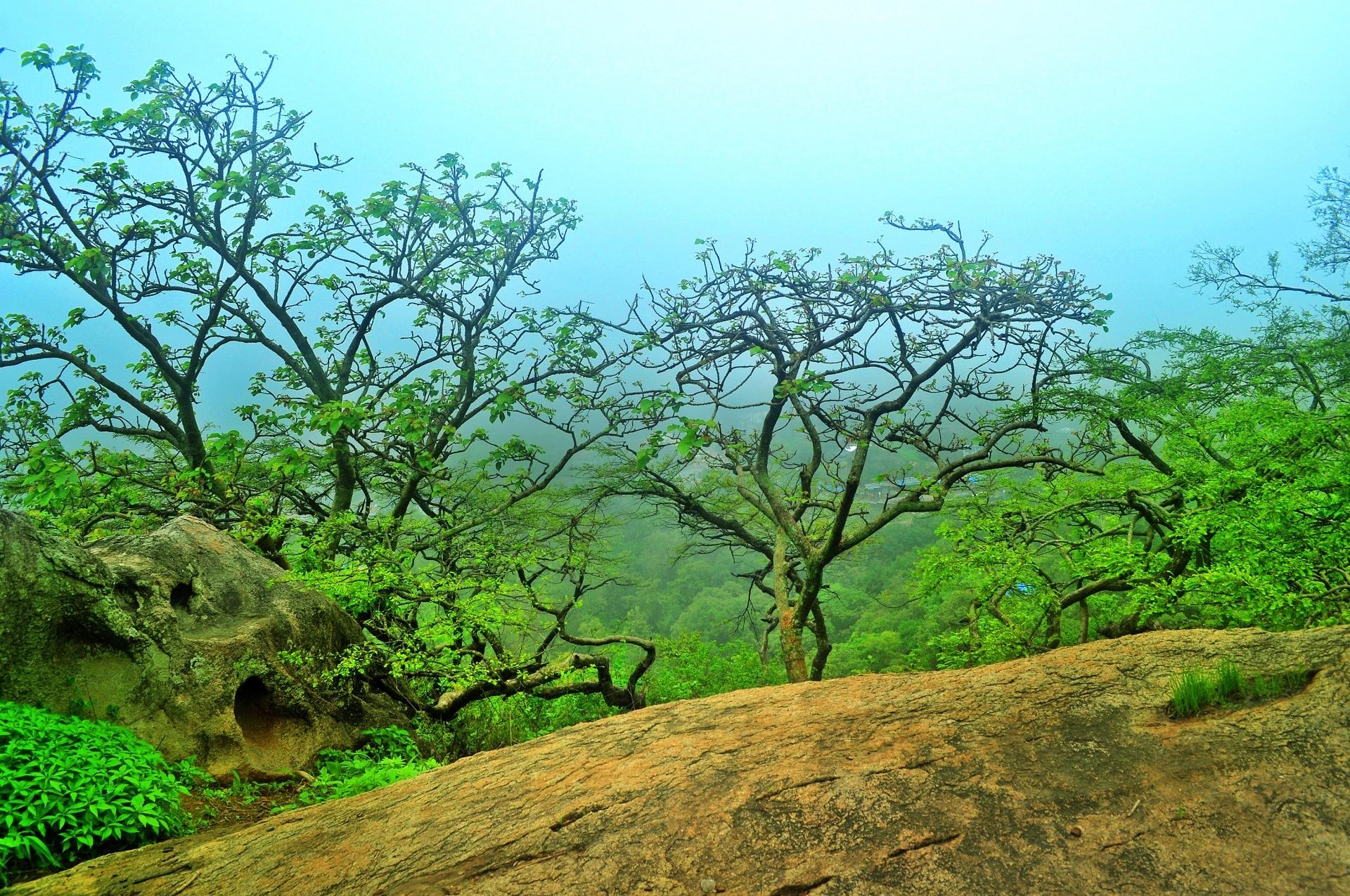 El bosque monzónico es un bosque estacional