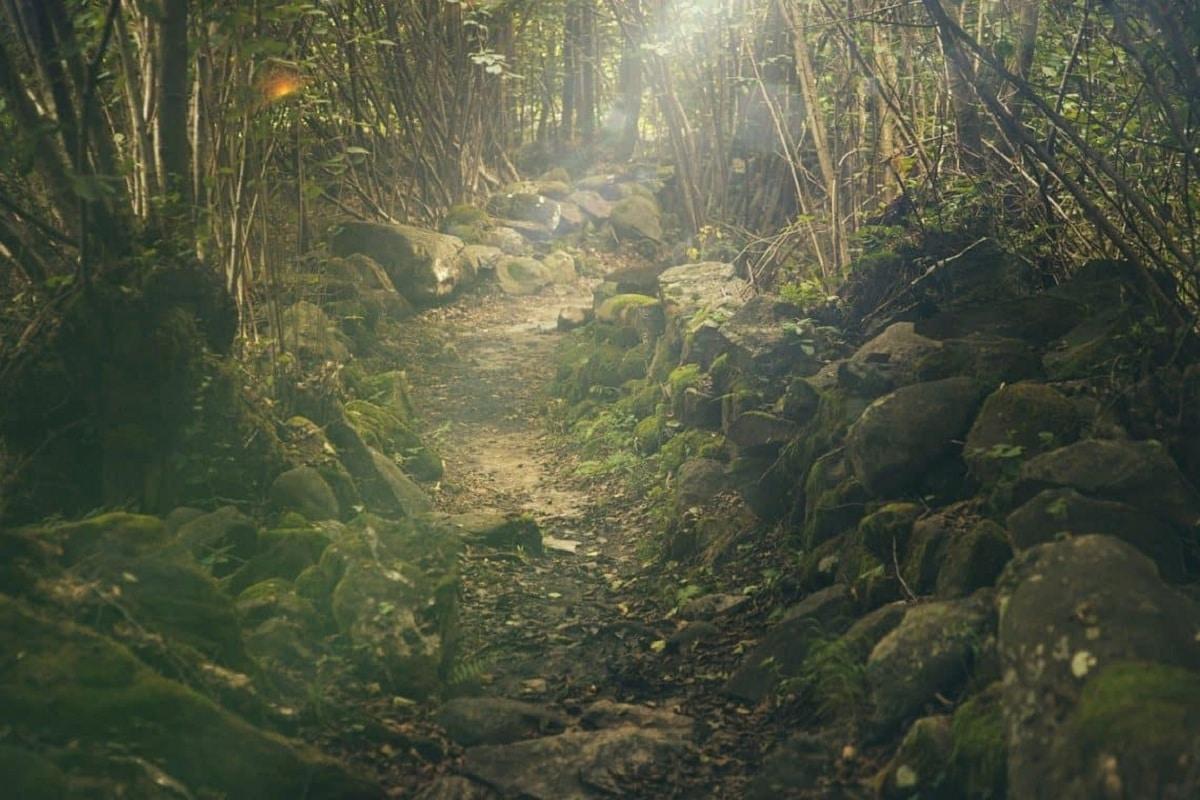 bosque perennifolio humedo
