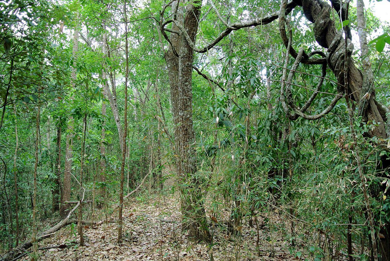 El bosque seco subtropical tiene árboles caducos