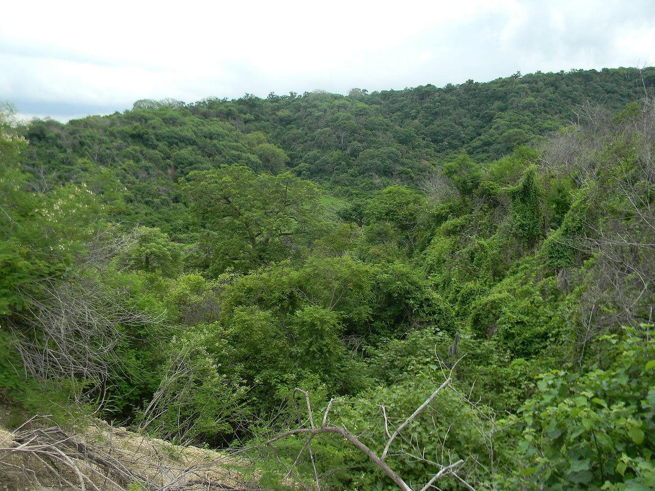 El bosque seco tropical es un bioma de bosques de frondosas