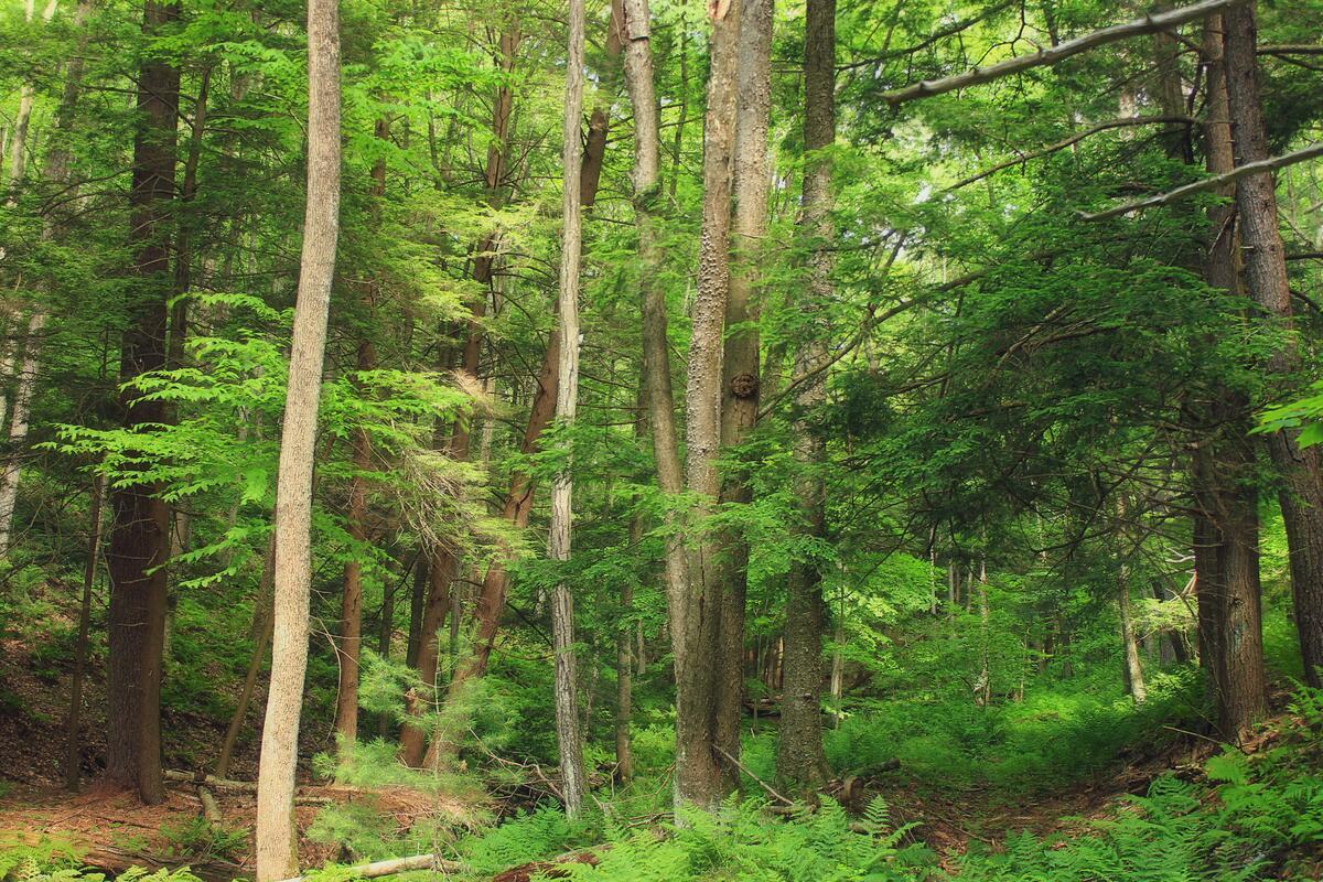 En un bosque la competencia puede ser brutal