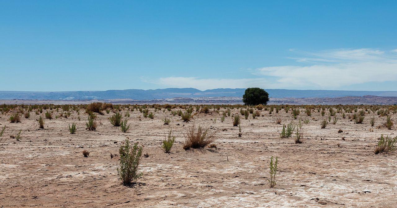 En el desierto hay poca vegetación
