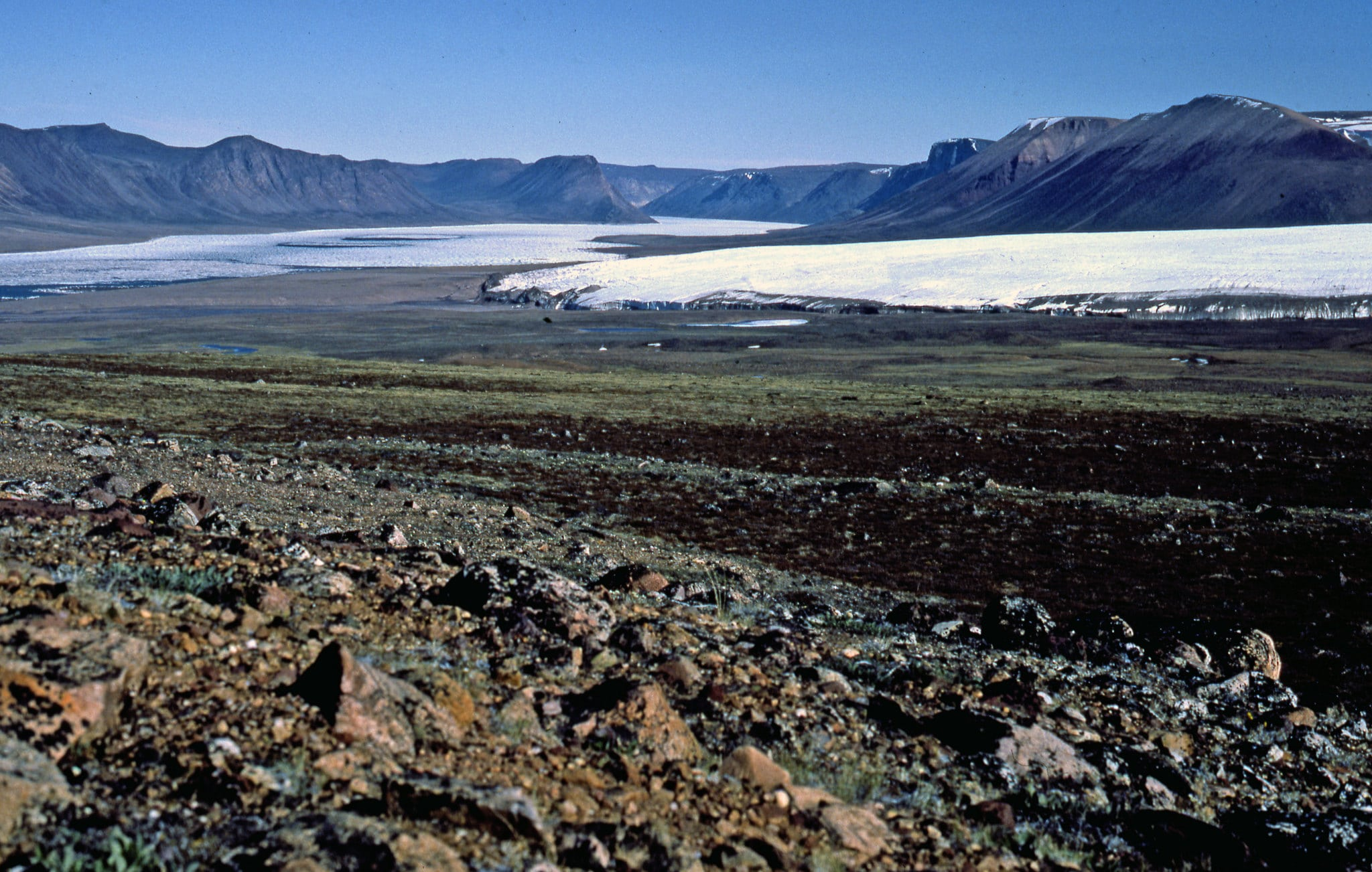 En el desierto polar hay escasa vegetación