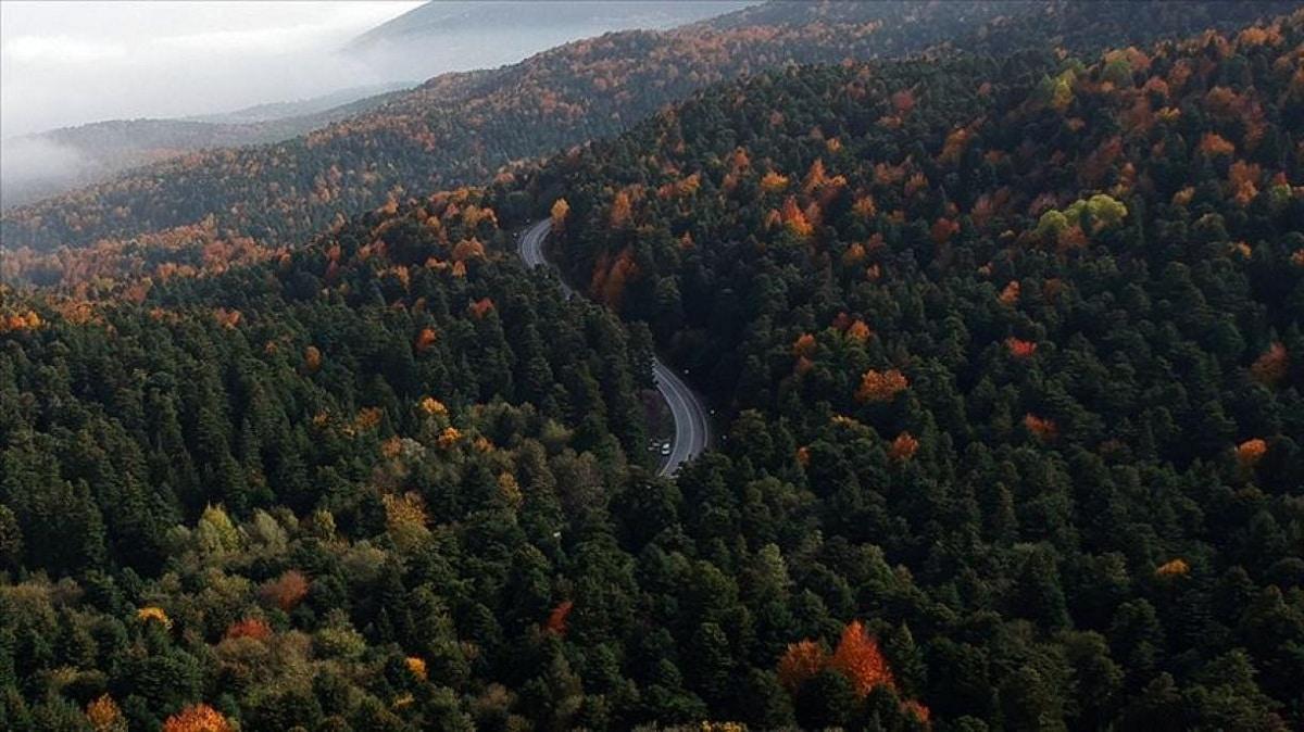 explotación forestal para madera