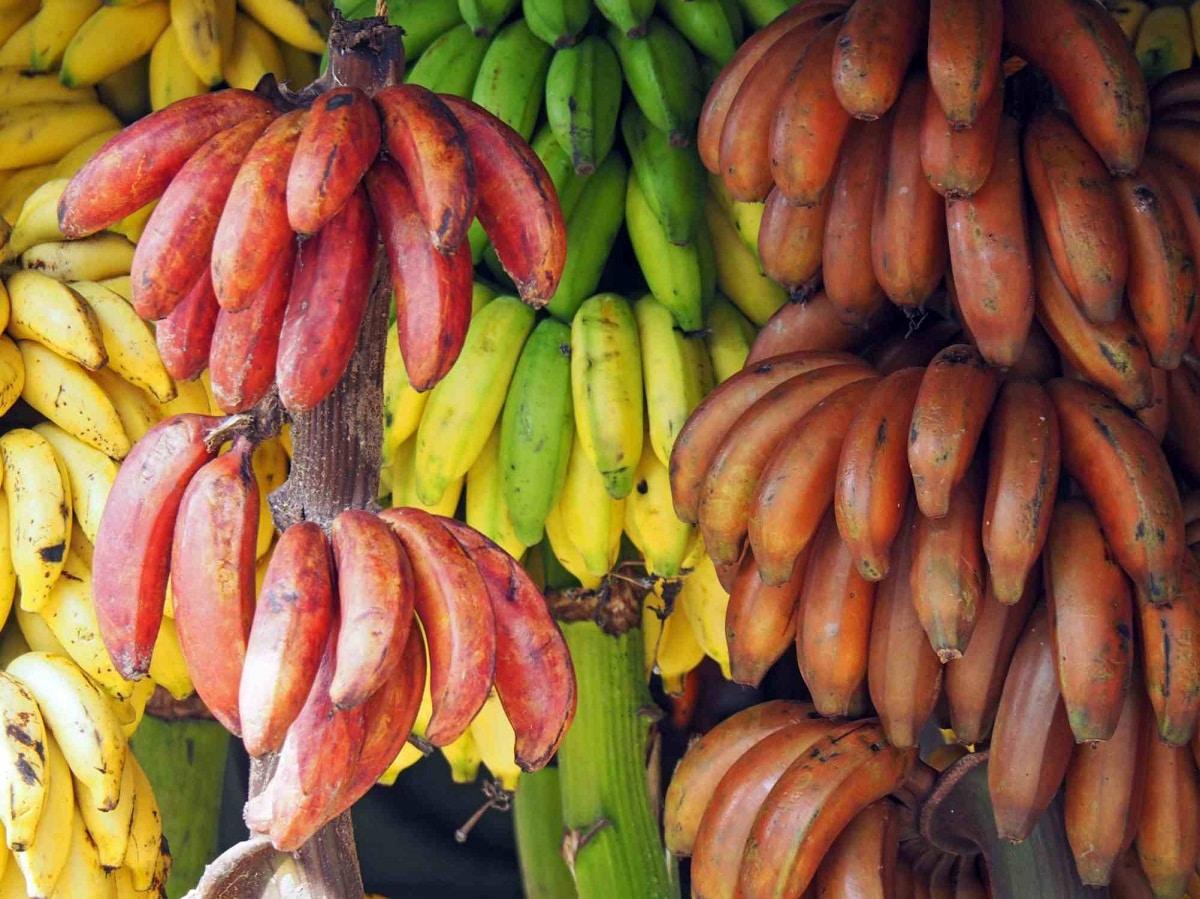 fruta parecida al platano y que se llama platano manzana