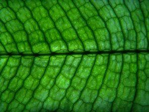 La célula vegetal es distinta a la animal
