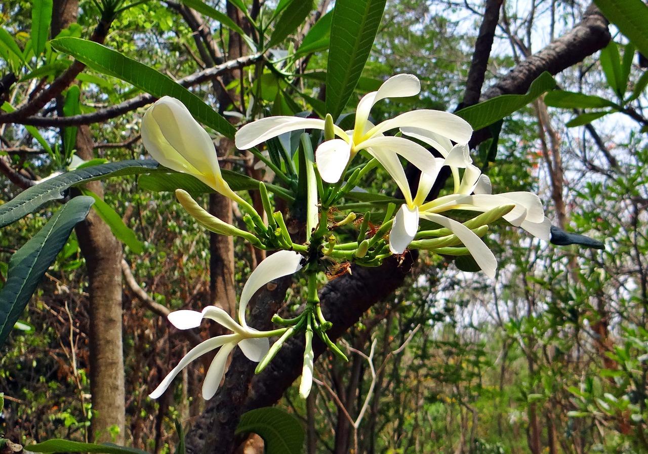 Las orquídeas que crecen en árboles no son parásitas de estos