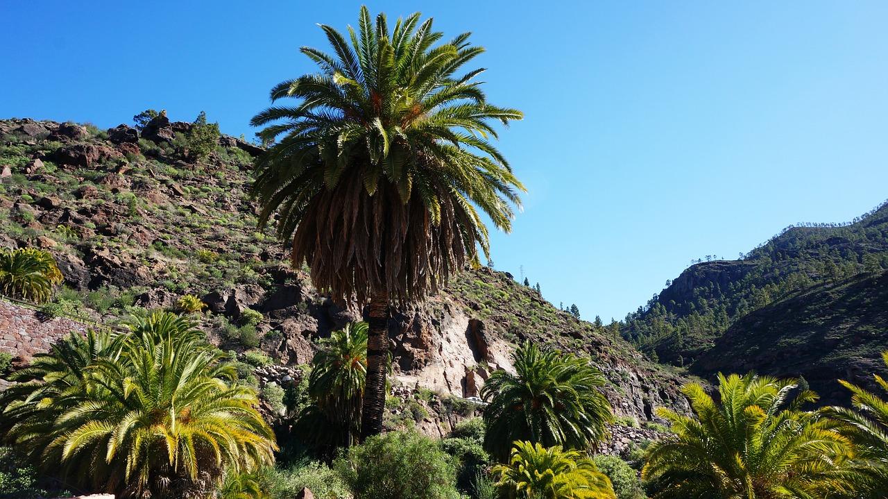 Hay muchas plantas en Canarias
