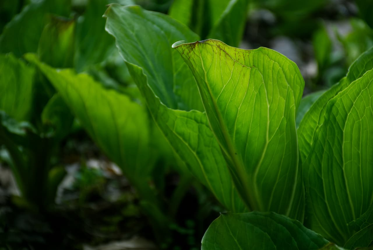 Las plantas son sensibles a muchas cosas