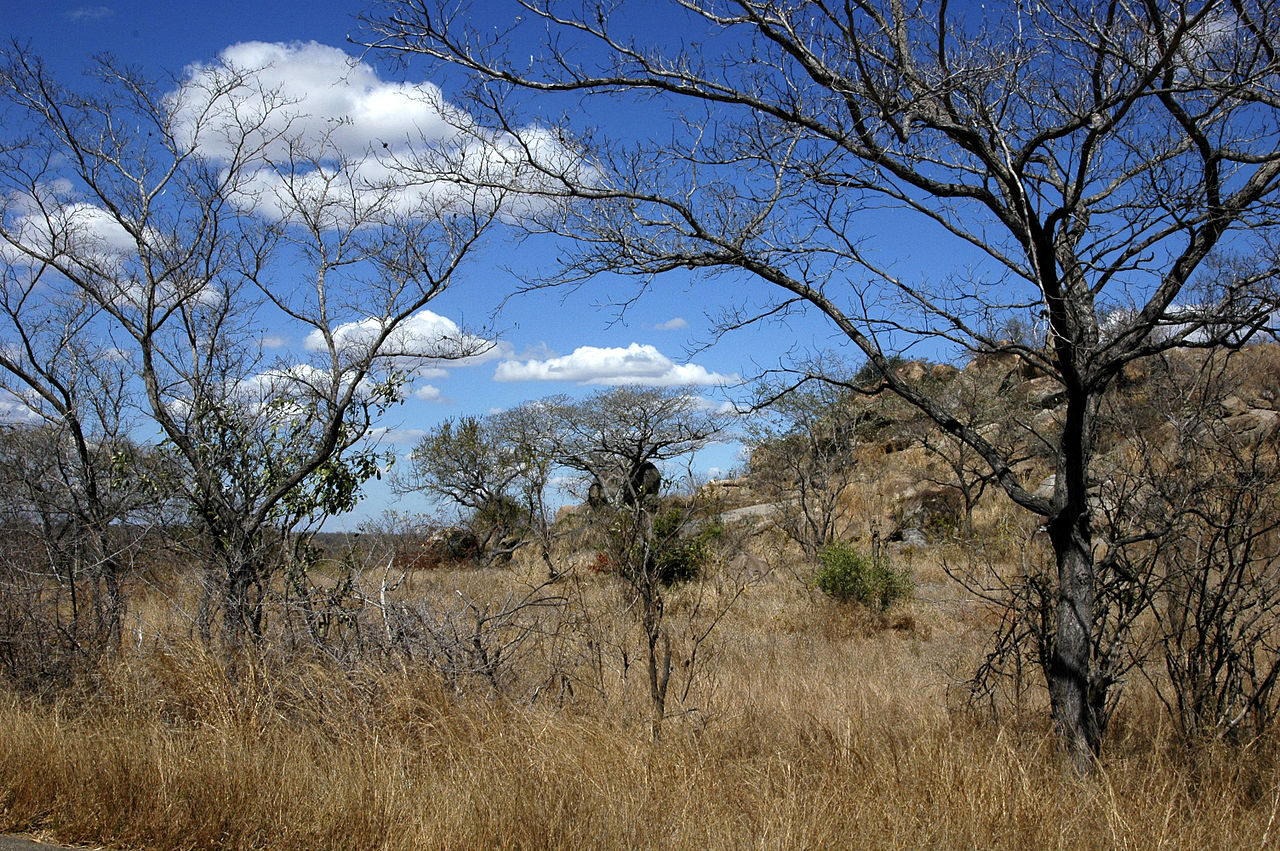 La sabana arbolada son paisajes en los que habitan árboles generalmente caducifolios