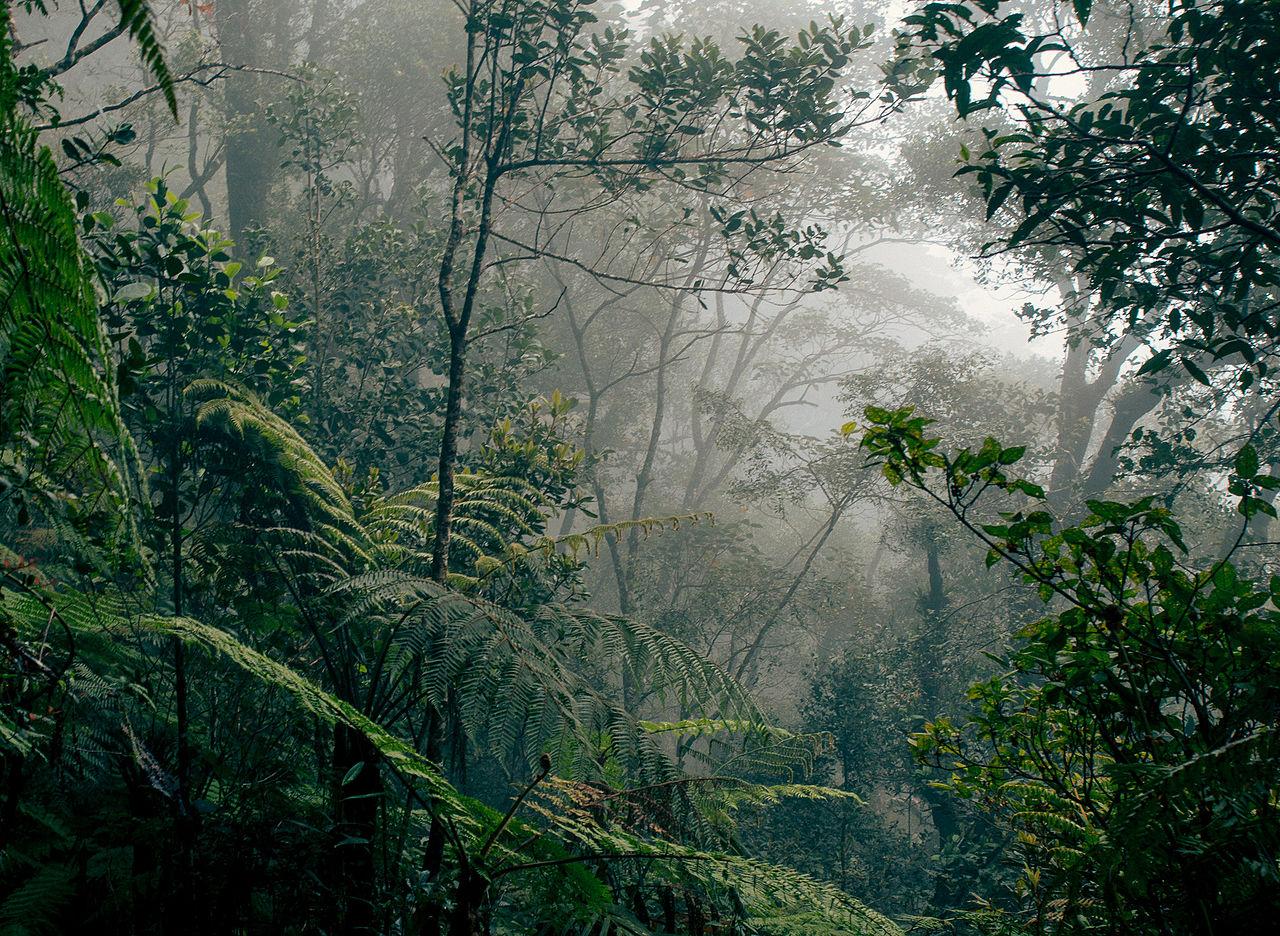 Selva húmeda de Borneo, una selva de frondosas