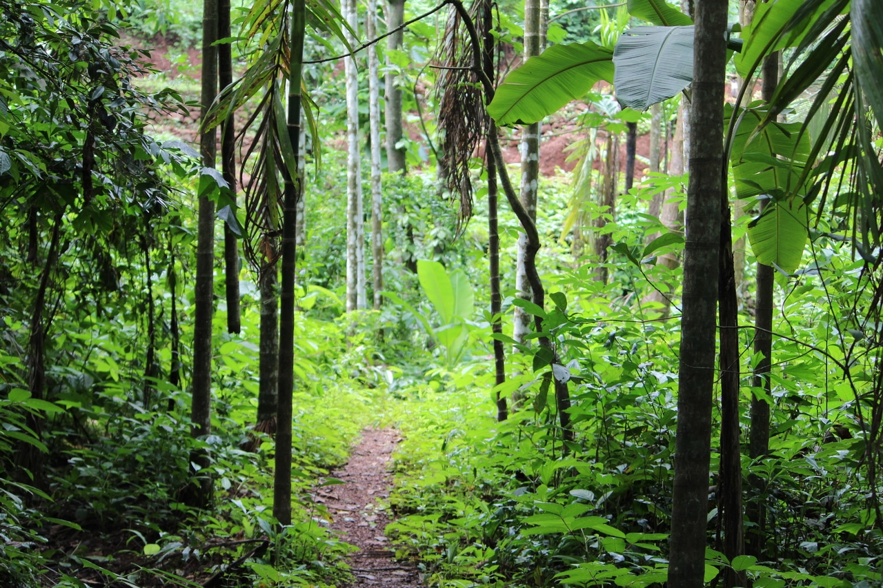 La selva tropical es un hervidero de vida vegetal
