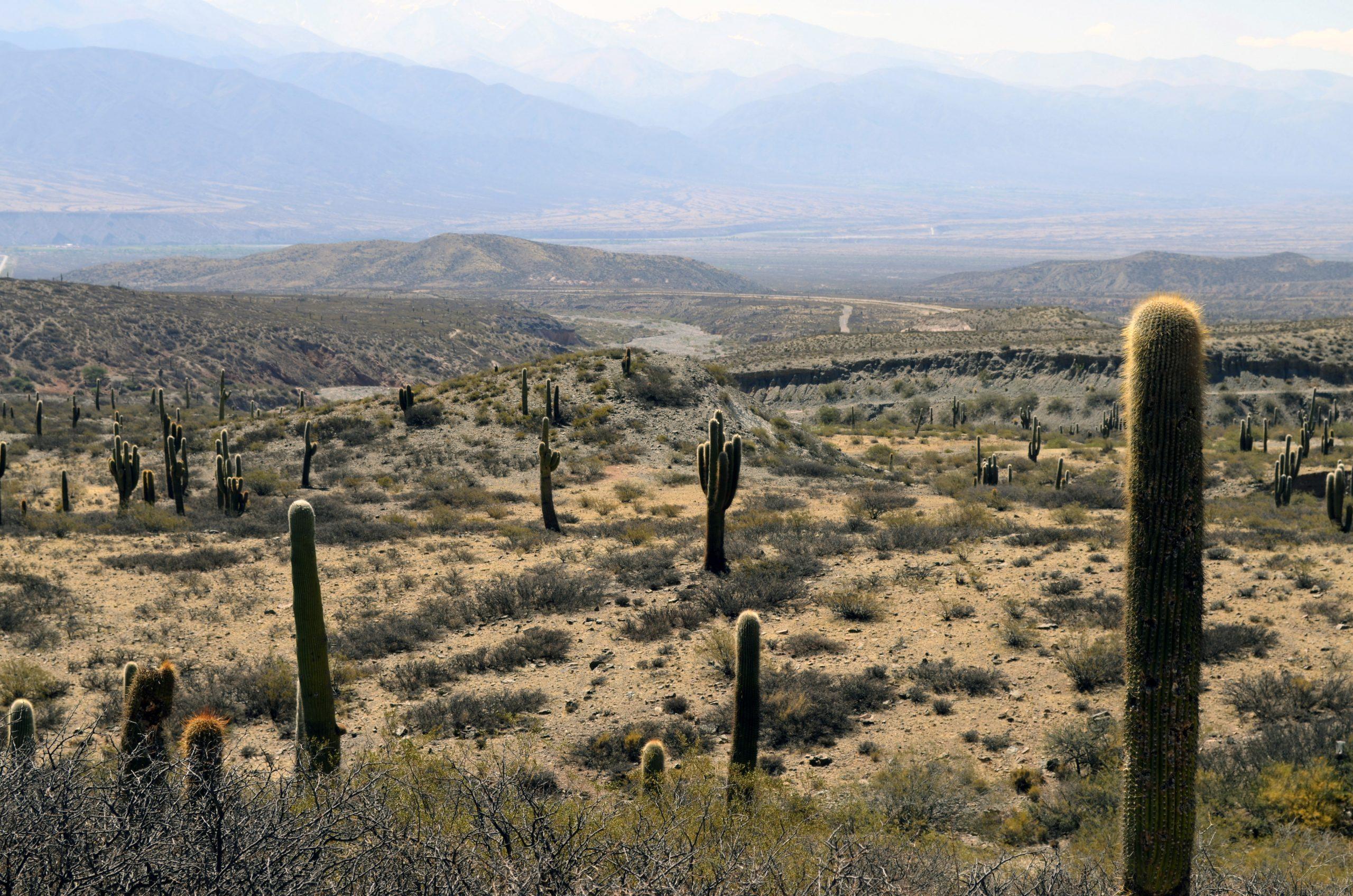 Los cactus viven en regiones áridas