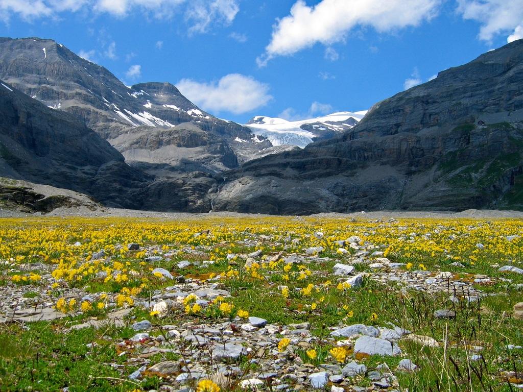 La tundra alpina es un bioma de climas muy fríos