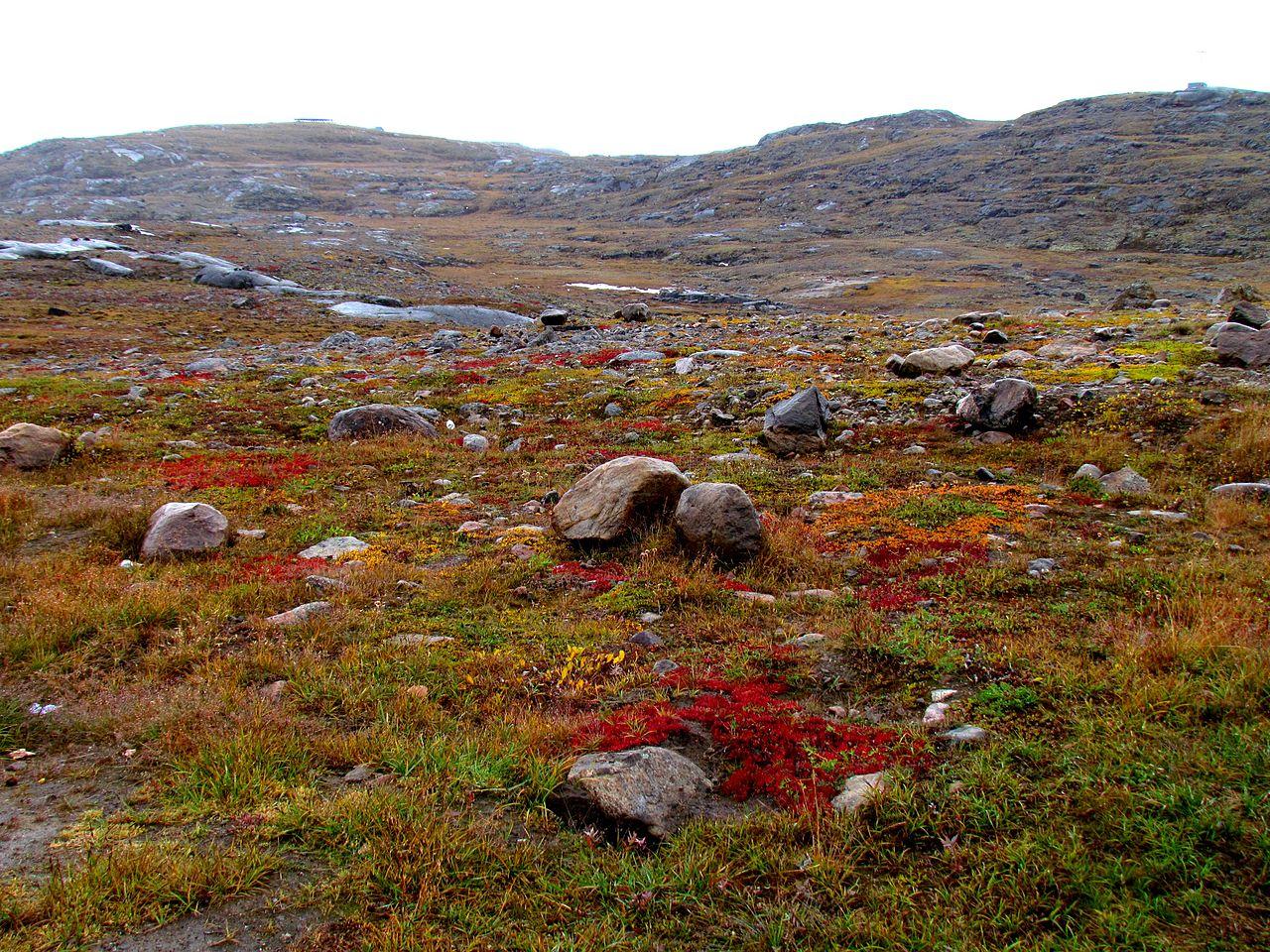 La tundra tiene plantas de porte bajo