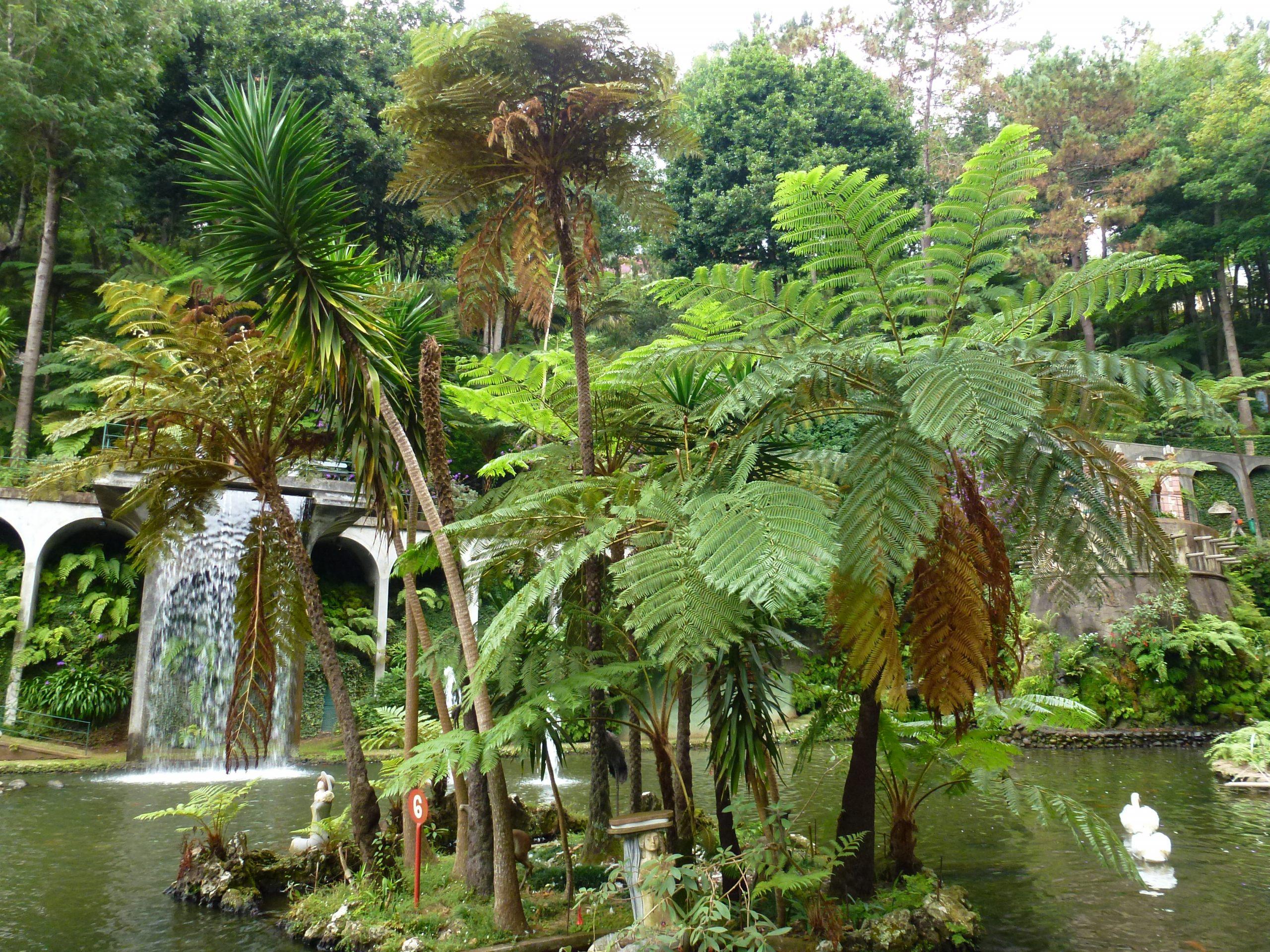 Jardín tropical con estanque