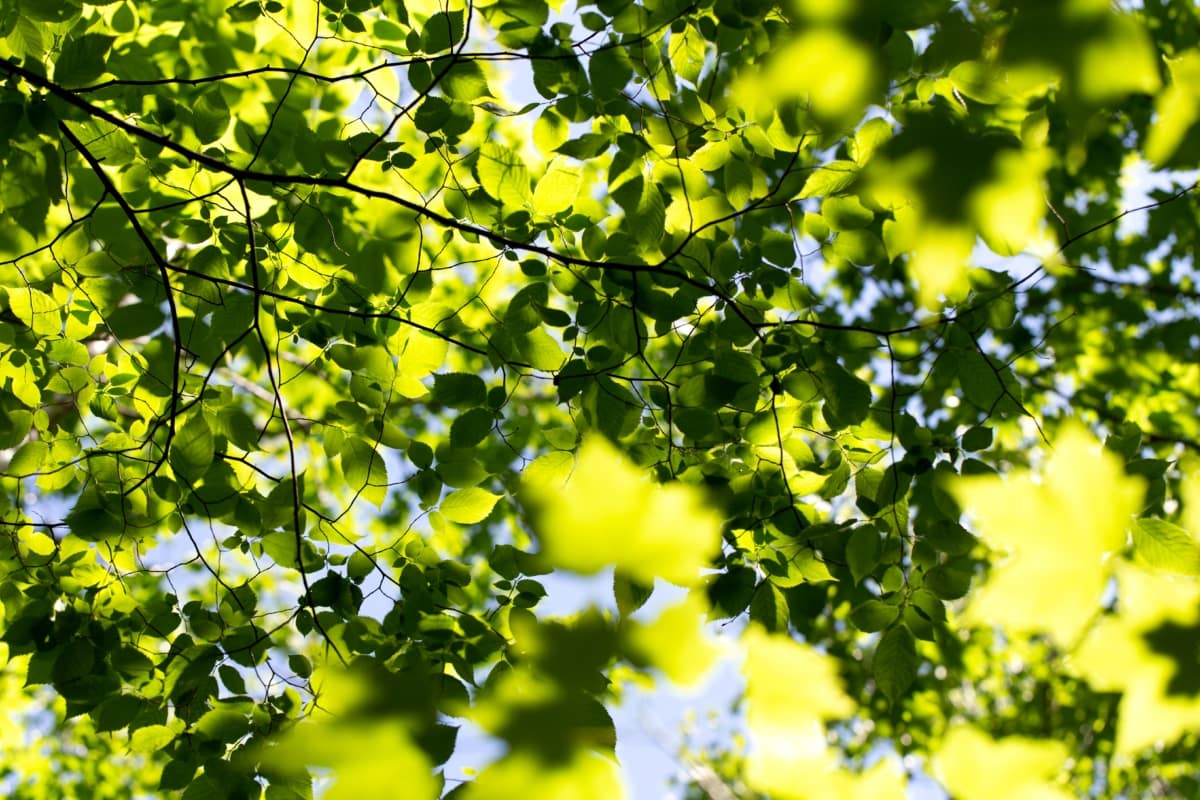 Las hojas se protegen del exceso de luz