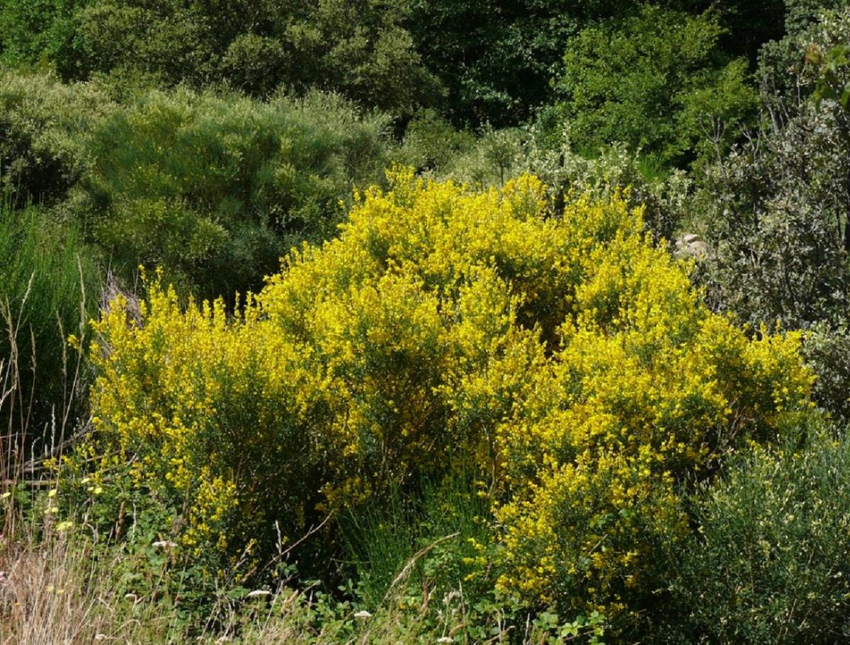 arbusto gigante lleno de flores